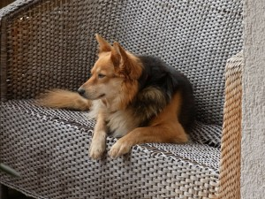 Dog on Wicker Seat