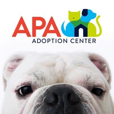 Apa Adoption Dog St Louis