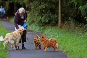 dog are great exercise companions