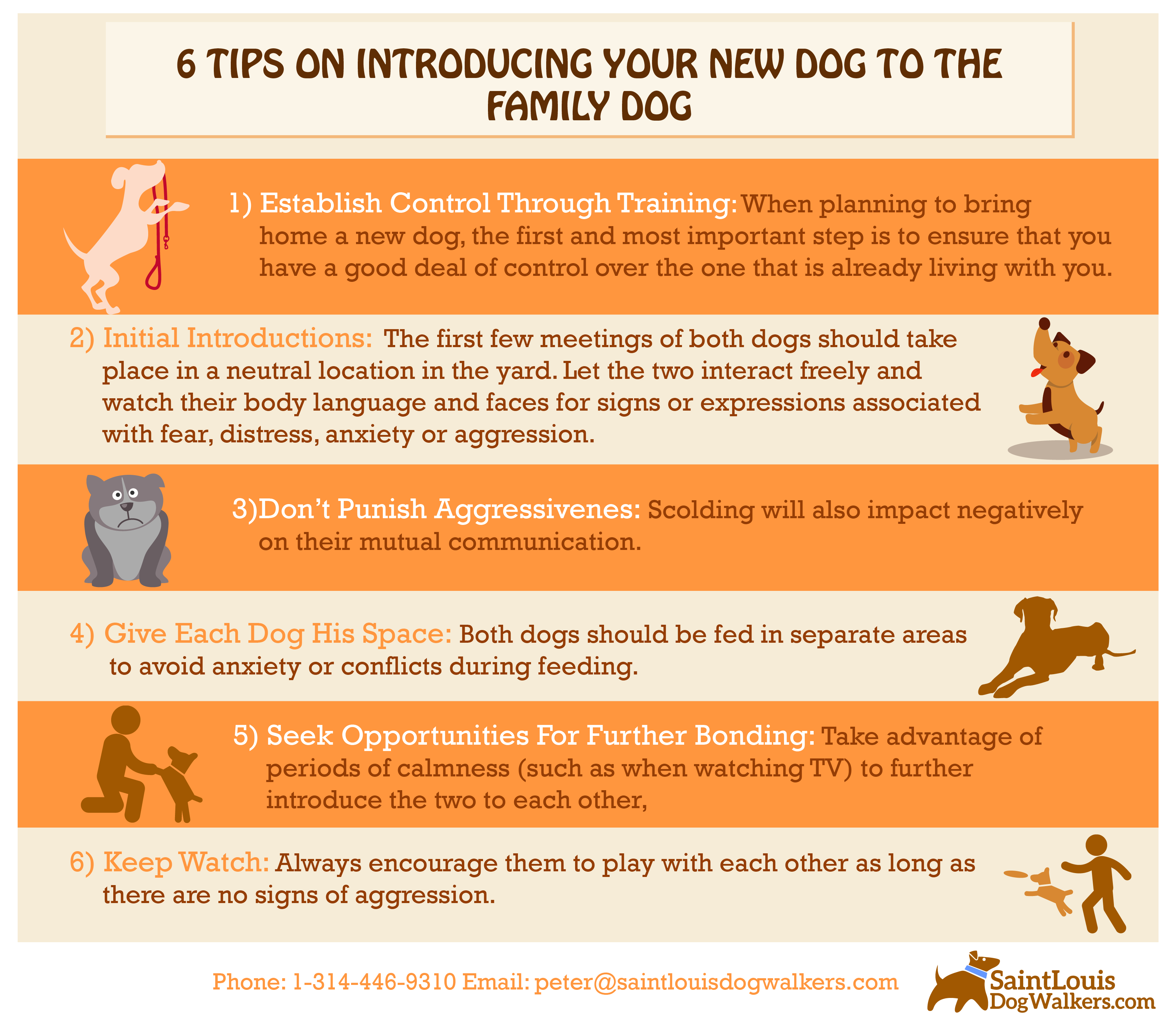 Watch How to Introduce Training to a New Puppy video
