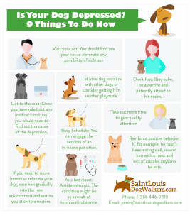 dog depression infographic