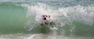 Water can prevent a dog from overheating