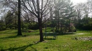 picnic table at the clayton dog park
