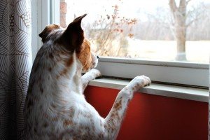 dogs living in an apartment have special requirements from dogs with yards