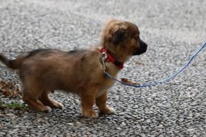 dog on a leash for a walk