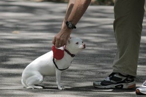 dog on leash about to go on a walk