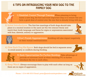 infographic with tips on how to introduce your new dog to your family dog