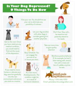 dog depression infographic